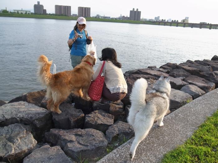 三匹の犬 (*^_^*)_c0049299_21271188.jpg