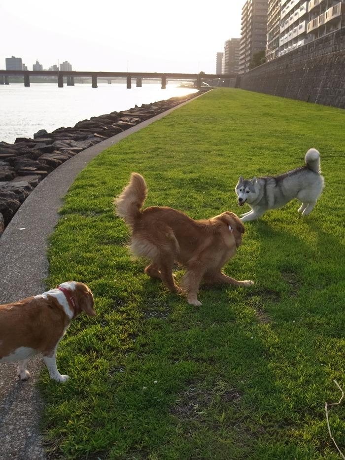 三匹の犬 (*^_^*)_c0049299_21282228.jpg