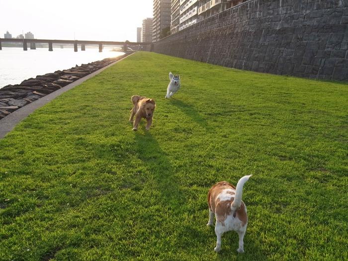 三匹の犬 (*^_^*)_c0049299_21285047.jpg