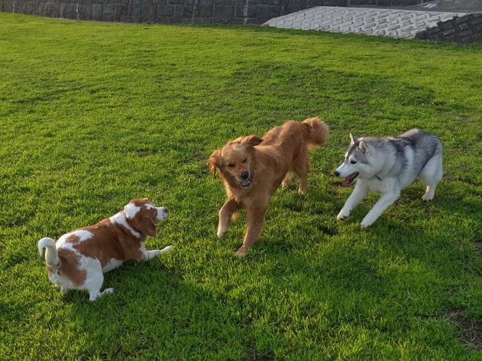 三匹の犬 (*^_^*)_c0049299_2129742.jpg