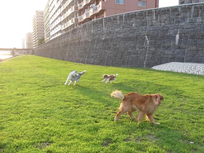 三匹の犬 (*^_^*)_c0049299_21313249.jpg