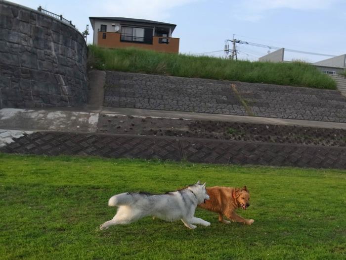 三匹の犬 (*^_^*)_c0049299_21322222.jpg