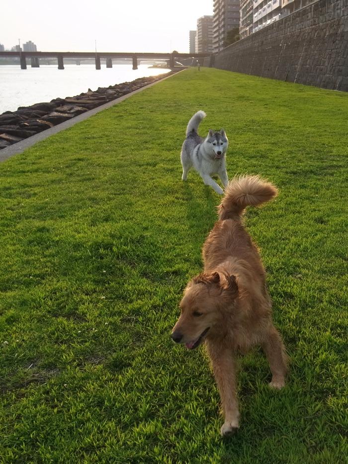 三匹の犬 (*^_^*)_c0049299_2132496.jpg