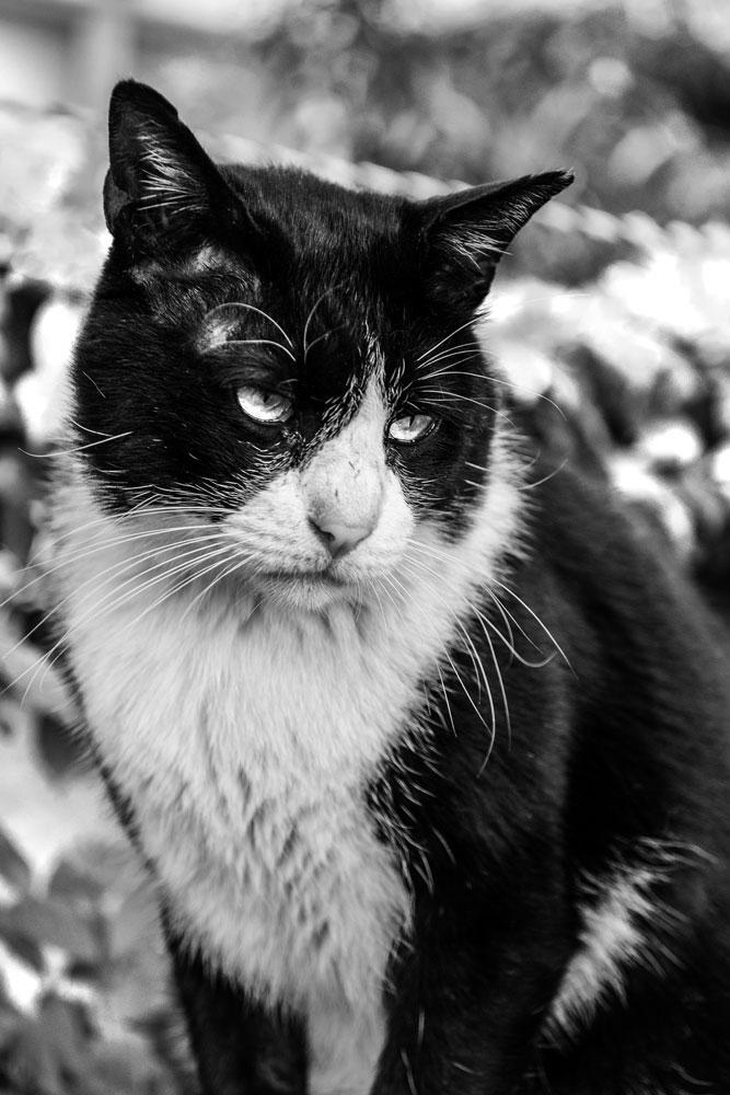 猫(弐)_e0004009_2255590.jpg