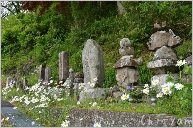 深緑の 「秋川渓谷」_e0219011_18183786.jpg