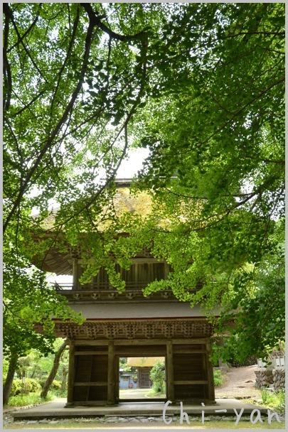 深緑の 「秋川渓谷」_e0219011_1818594.jpg