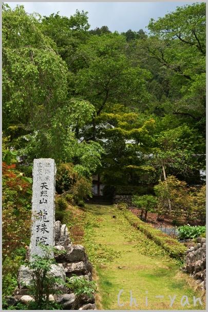 深緑の 「秋川渓谷」_e0219011_18203633.jpg
