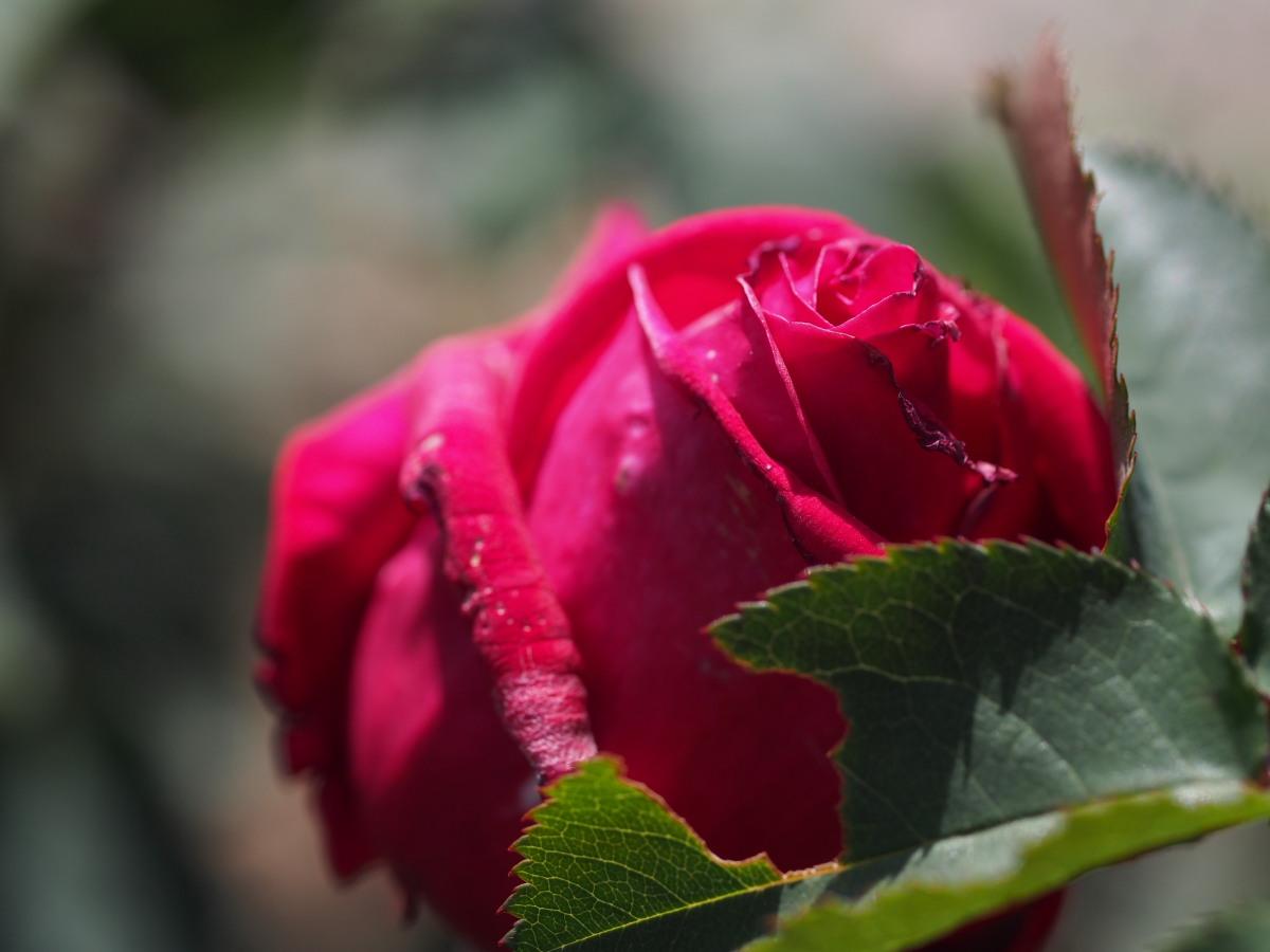 愛と希望_e0169421_21415042.jpg