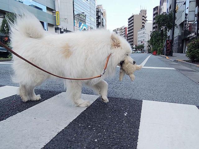 散歩は道連れ_c0062832_7183933.jpg