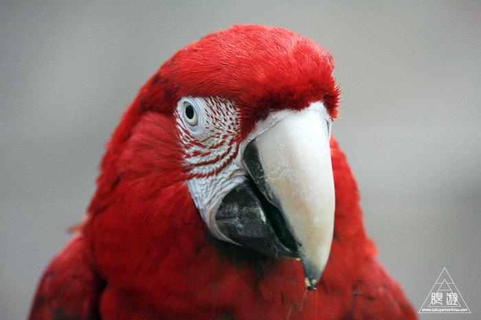 379 松江フォーゲルパーク ~鳥の動物園~_c0211532_12281225.jpg