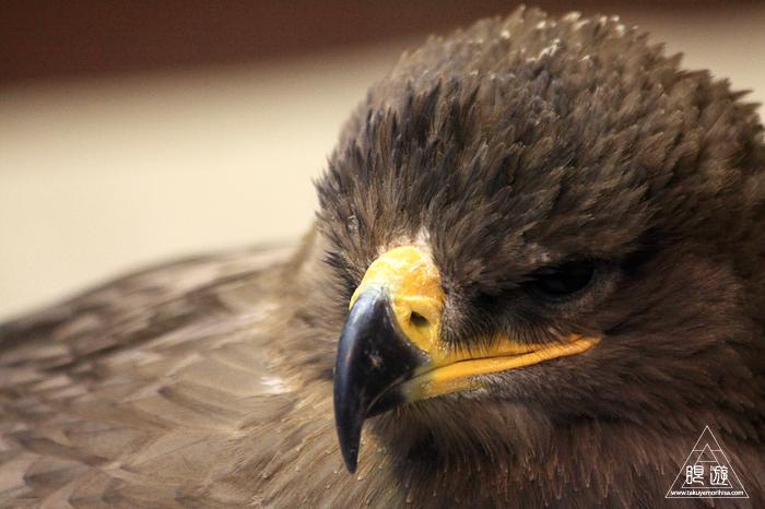 379 松江フォーゲルパーク ~鳥の動物園~_c0211532_12283872.jpg