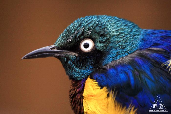 379 松江フォーゲルパーク ~鳥の動物園~_c0211532_12292672.jpg