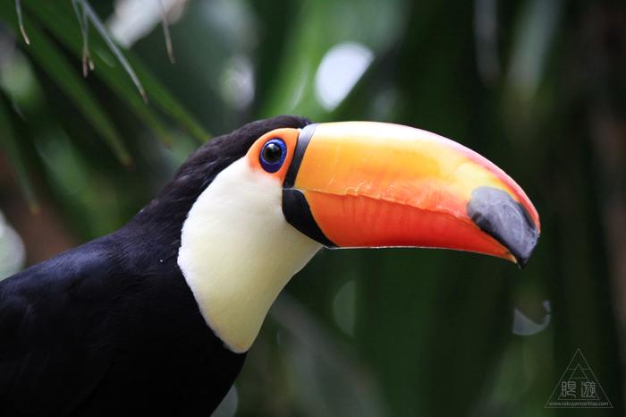 379 松江フォーゲルパーク ~鳥の動物園~_c0211532_17273776.jpg