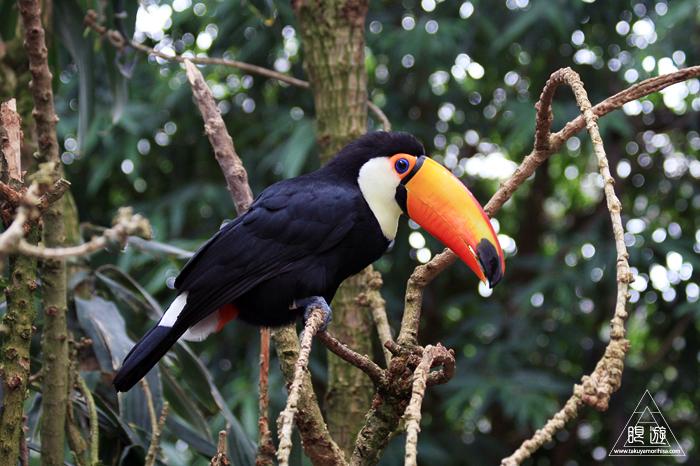 379 松江フォーゲルパーク ~鳥の動物園~_c0211532_17274381.jpg