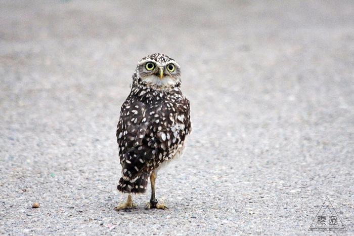 379 松江フォーゲルパーク ~鳥の動物園~_c0211532_1731255.jpg