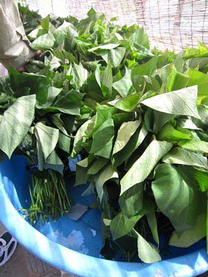 夏野菜苗たくさんあります!_c0141652_13361124.jpg