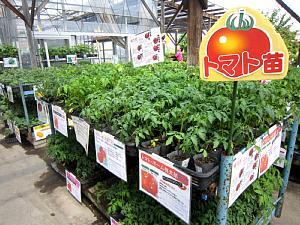 夏野菜苗たくさんあります!_c0141652_1336559.jpg