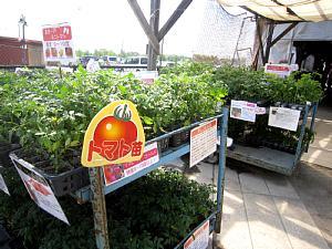 夏野菜苗たくさんあります!_c0141652_1337069.jpg