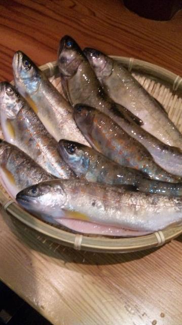 あまご&岩魚_e0272568_10364499.jpg