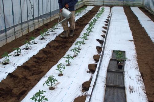 ミニトマト苗を植える_c0110869_15145015.jpg
