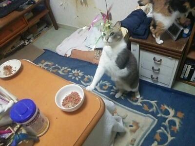 猫じゃらしで_b0112380_21454317.jpg
