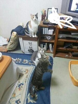 猫じゃらしで_b0112380_21472162.jpg