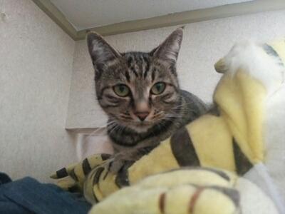 猫三匹_b0112380_2281393.jpg