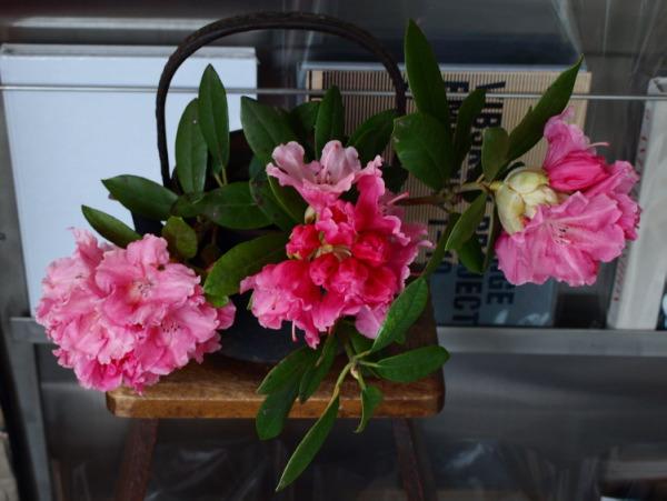 花とファッション アズマシャクナゲとカシミヤのカットソー_e0122680_19275843.jpg
