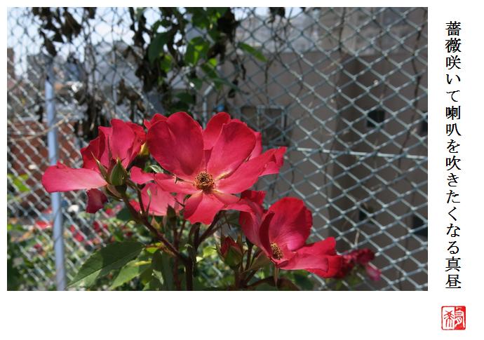 屋上の薔薇_a0248481_19521387.jpg