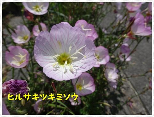 b0175688_0333798.jpg