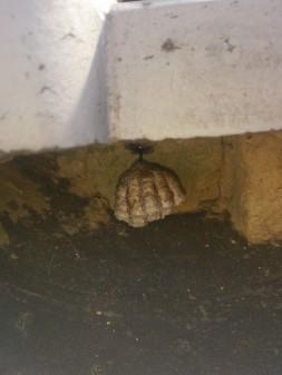 板橋区の上板橋で瓦屋根修理工事_c0223192_2113058.jpg