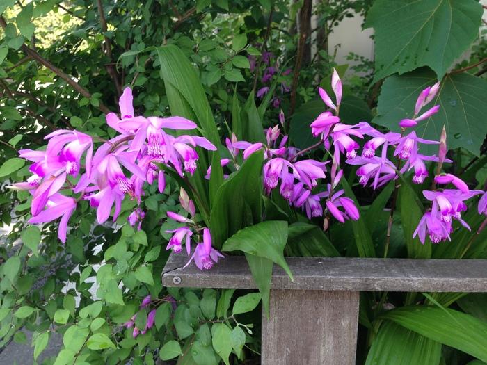 その後の花たち_f0223603_19131450.jpg