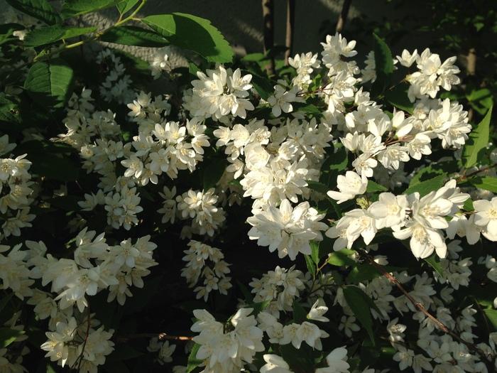その後の花たち_f0223603_19143588.jpg