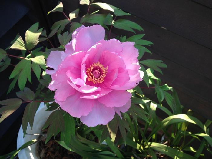 その後の花たち_f0223603_19152066.jpg