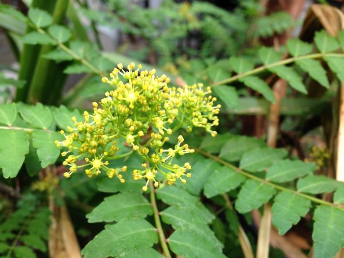 その後の花たち_f0223603_19173089.jpg