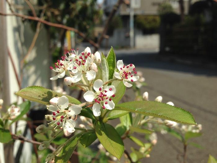 その後の花たち_f0223603_19174887.jpg