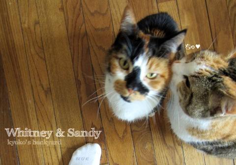 WhitneyとSandy_b0253205_4151529.jpg