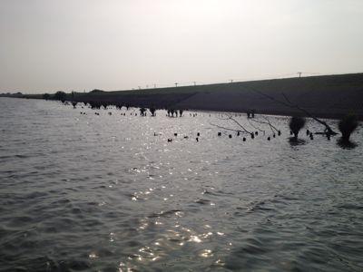 利根川水系DAY3☆_e0100021_2352357.jpg