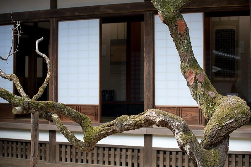 初夏の弘道館ー2_b0230131_849142.jpg
