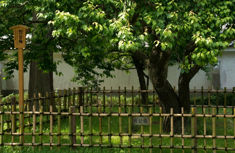 初夏の弘道館ー2_b0230131_8492617.jpg