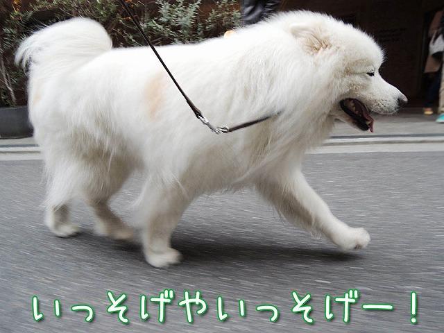 YEBISな動物園_c0062832_6442051.jpg