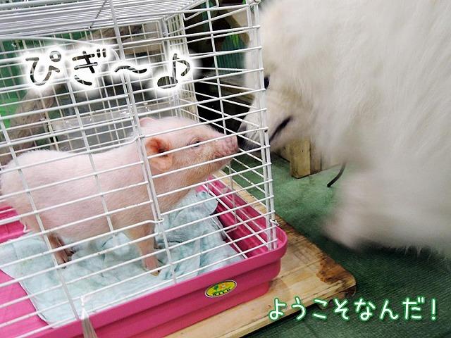 YEBISな動物園_c0062832_6445023.jpg