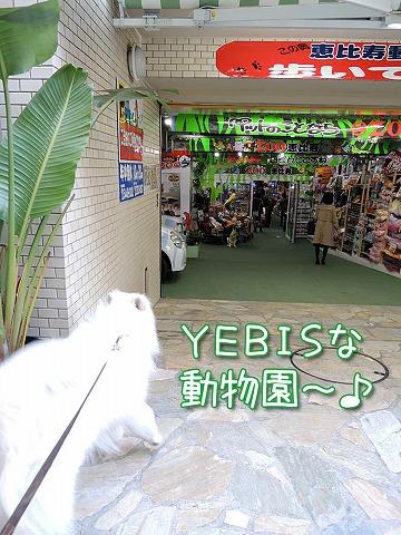 YEBISな動物園_c0062832_6452418.jpg