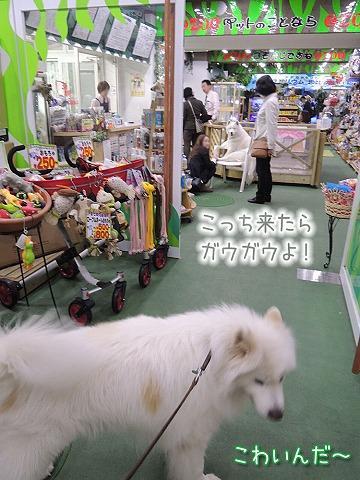 YEBISな動物園_c0062832_6454444.jpg