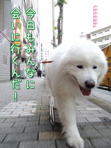 YEBISな動物園_c0062832_6455512.jpg