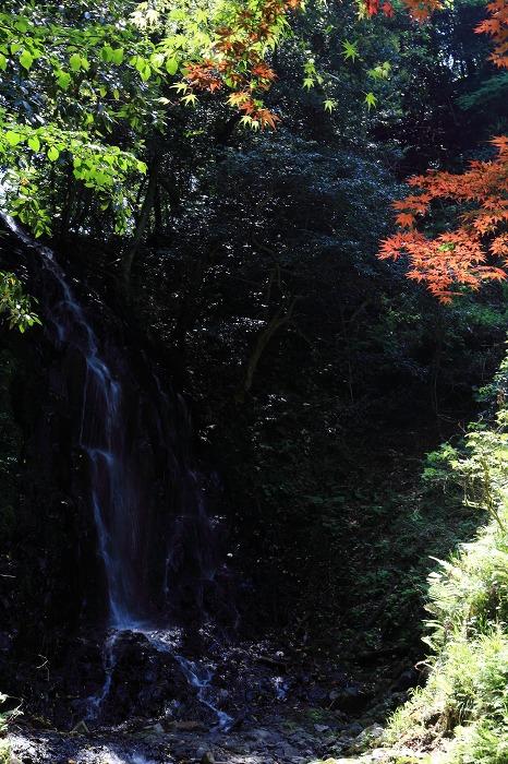 京丹後市 滝巡り_a0294534_1352116.jpg