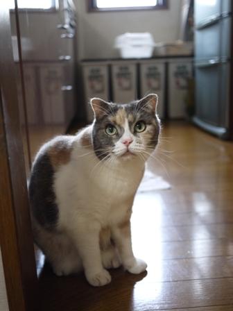 猫のお友だち マミちゃん編。_a0143140_21503568.jpg