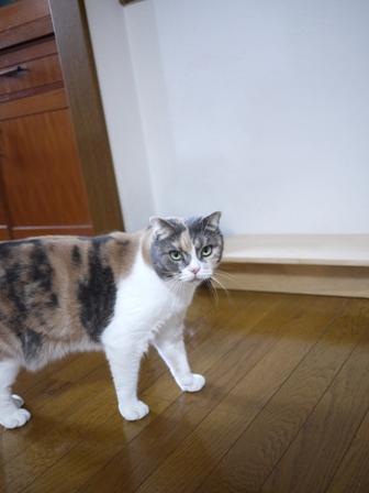 猫のお友だち マミちゃん編。_a0143140_2150478.jpg