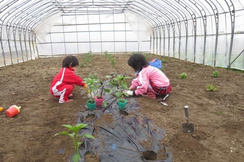家庭菜園♪_f0231042_13474876.jpg