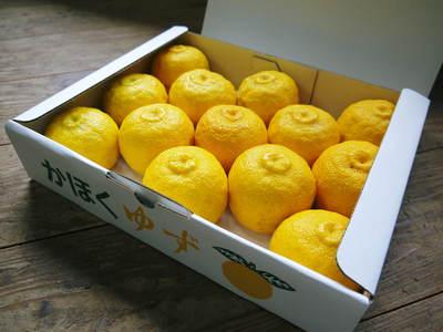 香り高き柚子(ゆず) 満開の柚子の花が咲き誇っていました!その1_a0254656_19471893.jpg